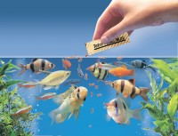 How to Choose the Best Food for Your Fish?